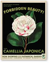 poster-camellia.jpg