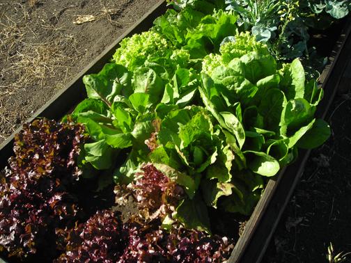 salad-days.jpg