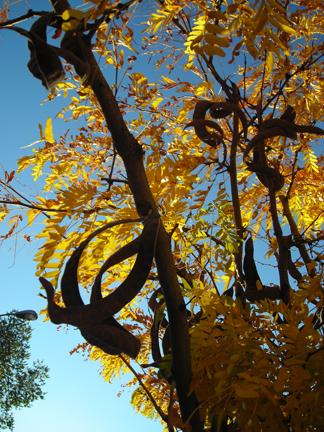 what-tree.jpg